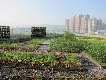 国外建筑屋顶植物